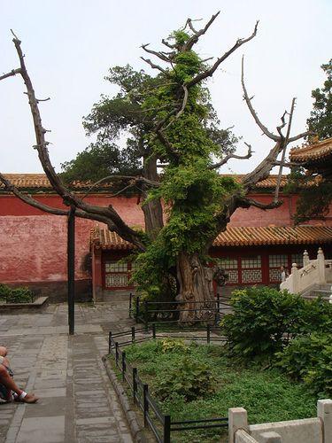 China Beijing The Forbidden City
