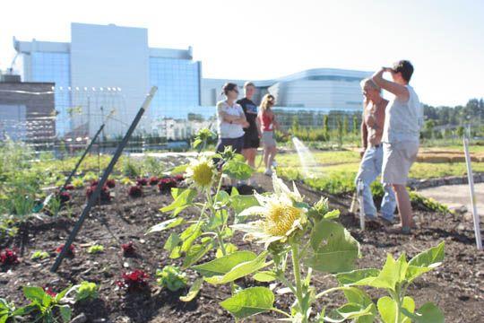 a00d6d19c291761d48a28eab36b508df - Bio Intensive Gardening In The Philippines