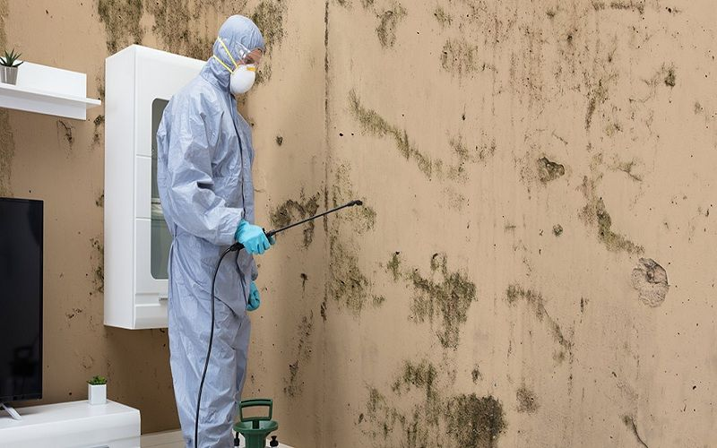 Mold Inspection Specialist