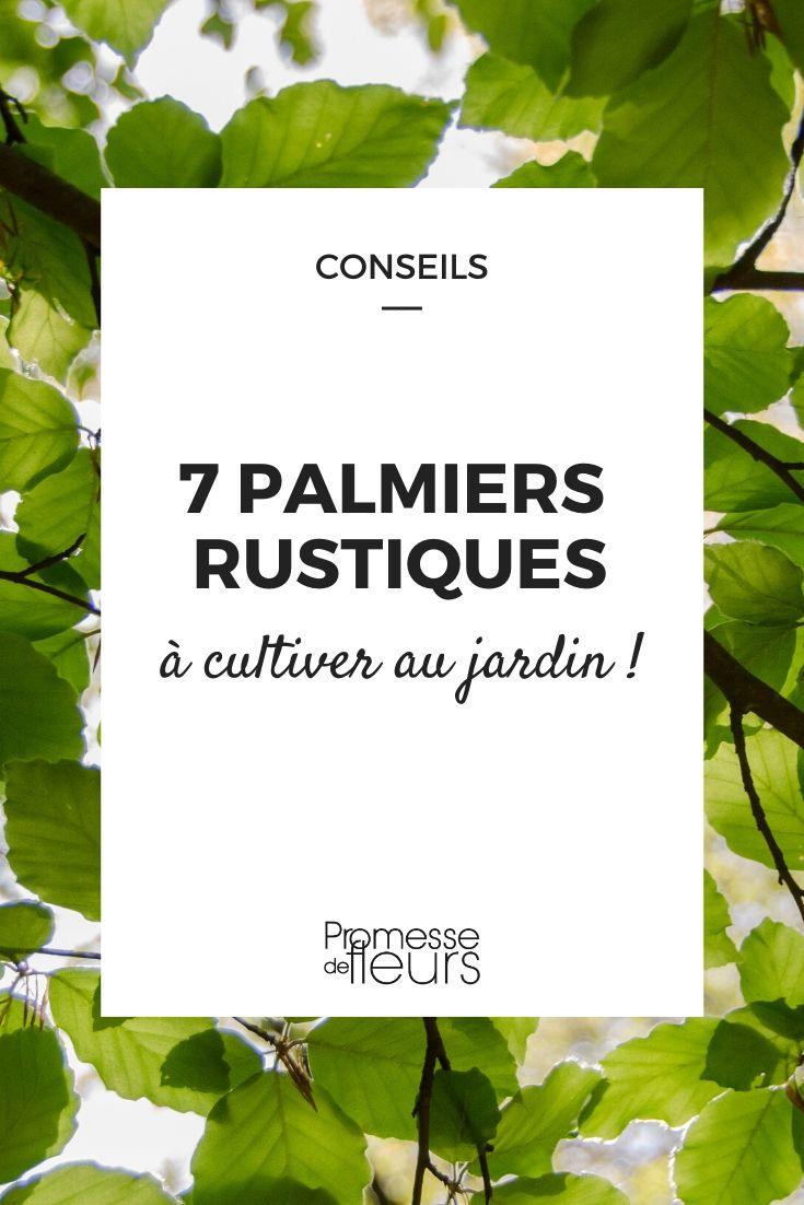7 Palmiers Rustiques A Planter Partout En France Ou Presque Palmiers Astuce Jardin Et Rustique