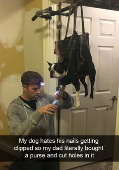 40 Funny #Dog #Snap 40 Funny #Dog #Snapchats That You Need To See Right Now #funnydogs