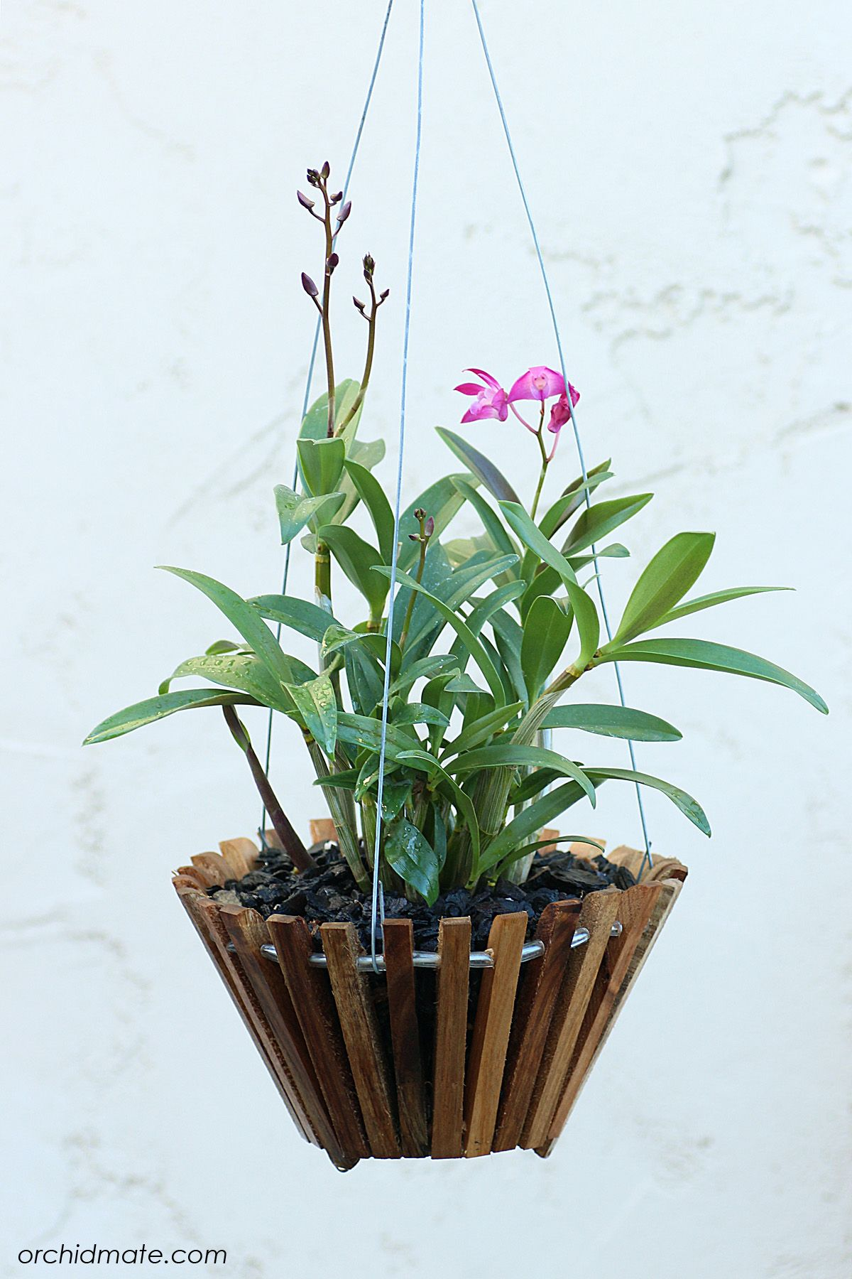 Trade Orchid Supplies Wood Baskets Orchids Orchids Orchid