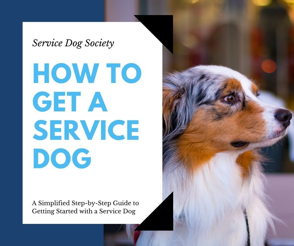 How To Get A Service Dog A Simplified Step By Step Guide Dog
