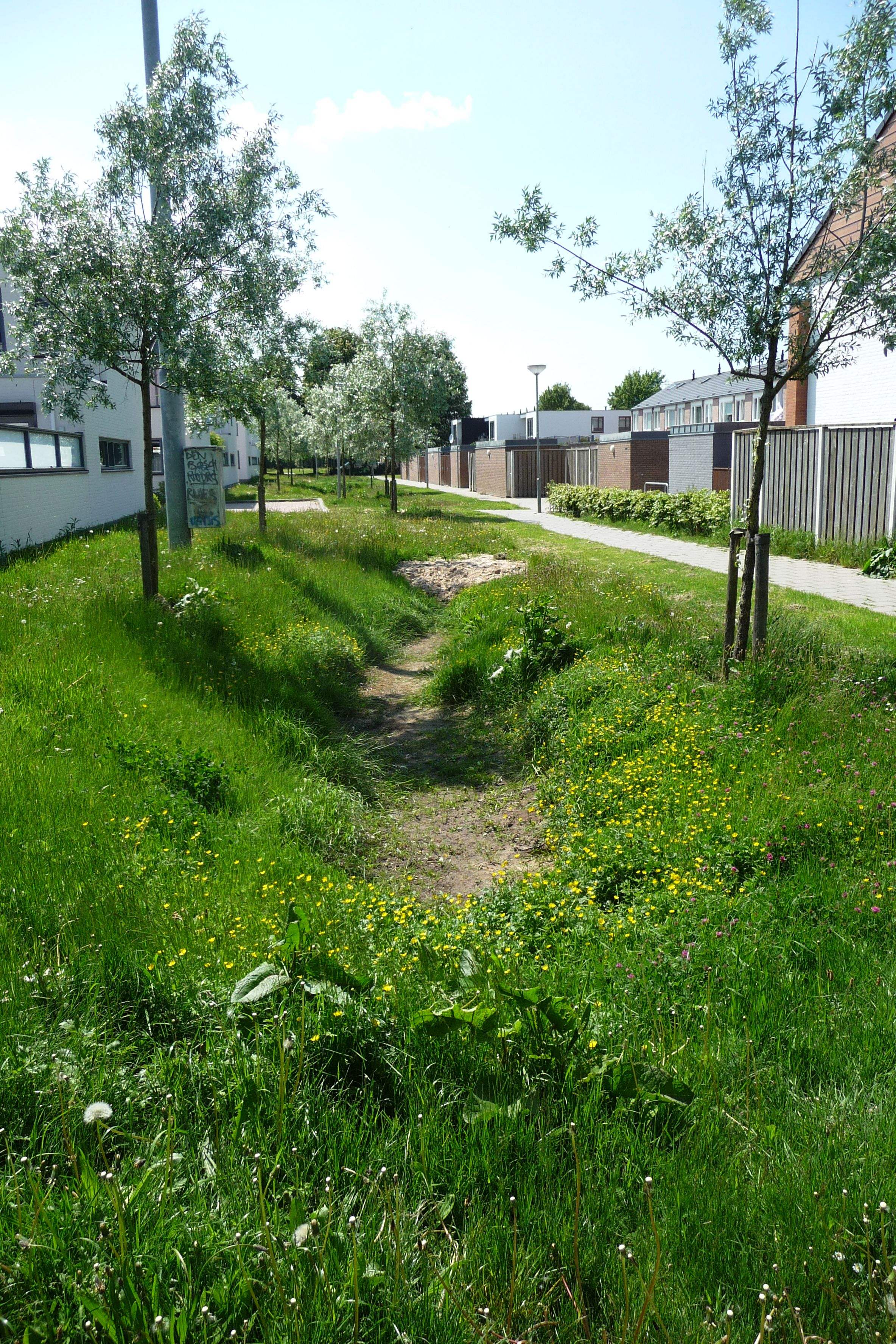 Wadi in noord 39 s hertogenbosch swales pinterest for Rain garden design