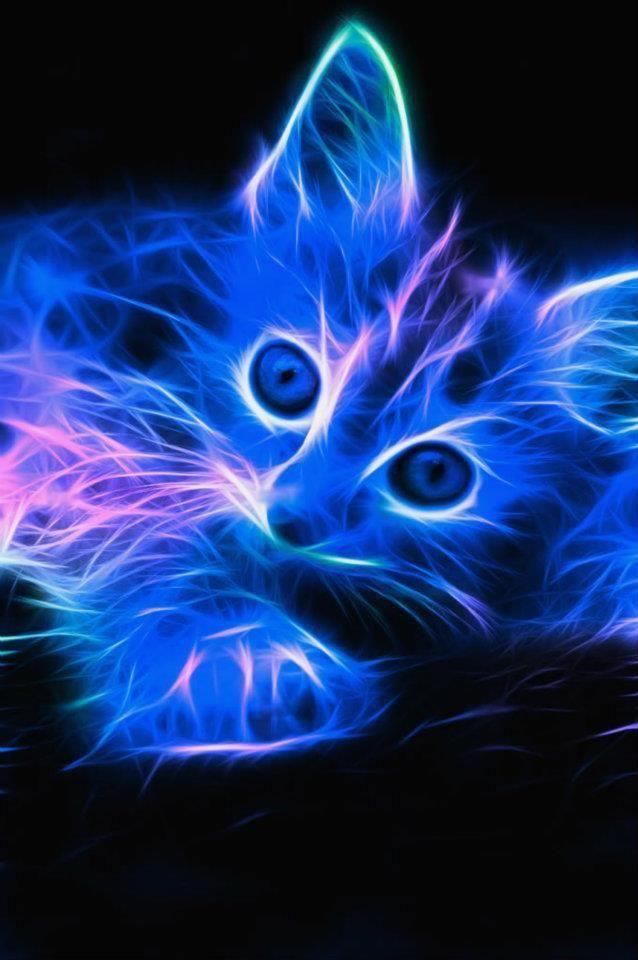 Neon Cat Like This Fondos De Gato Fondos De Pantalla