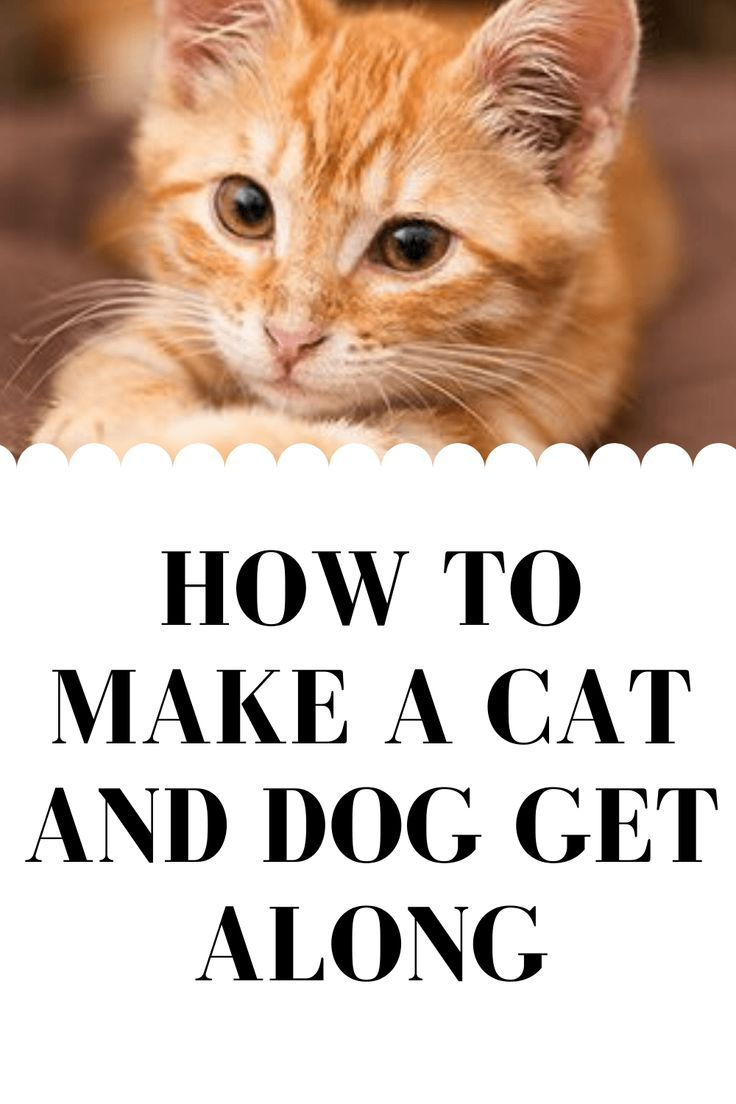 How to Make a Cat and Dog Get Along in 2020 Cat behavior
