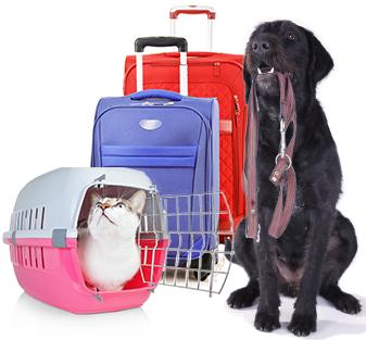 Pet Travel Guide Car, Bus, and Train Travel Petplan