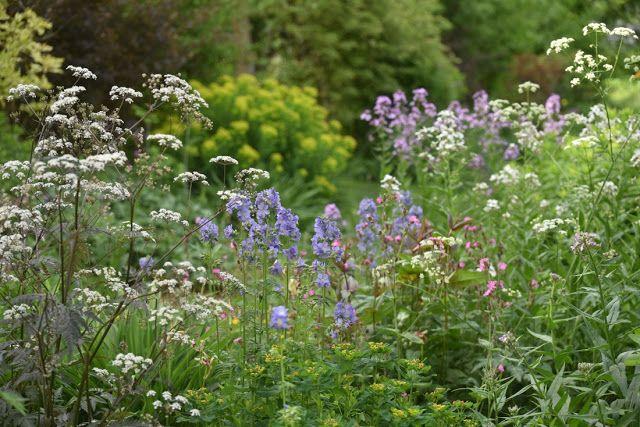 Storchschnabel Und Andere Stauden 2018 Garten Garden Hardy