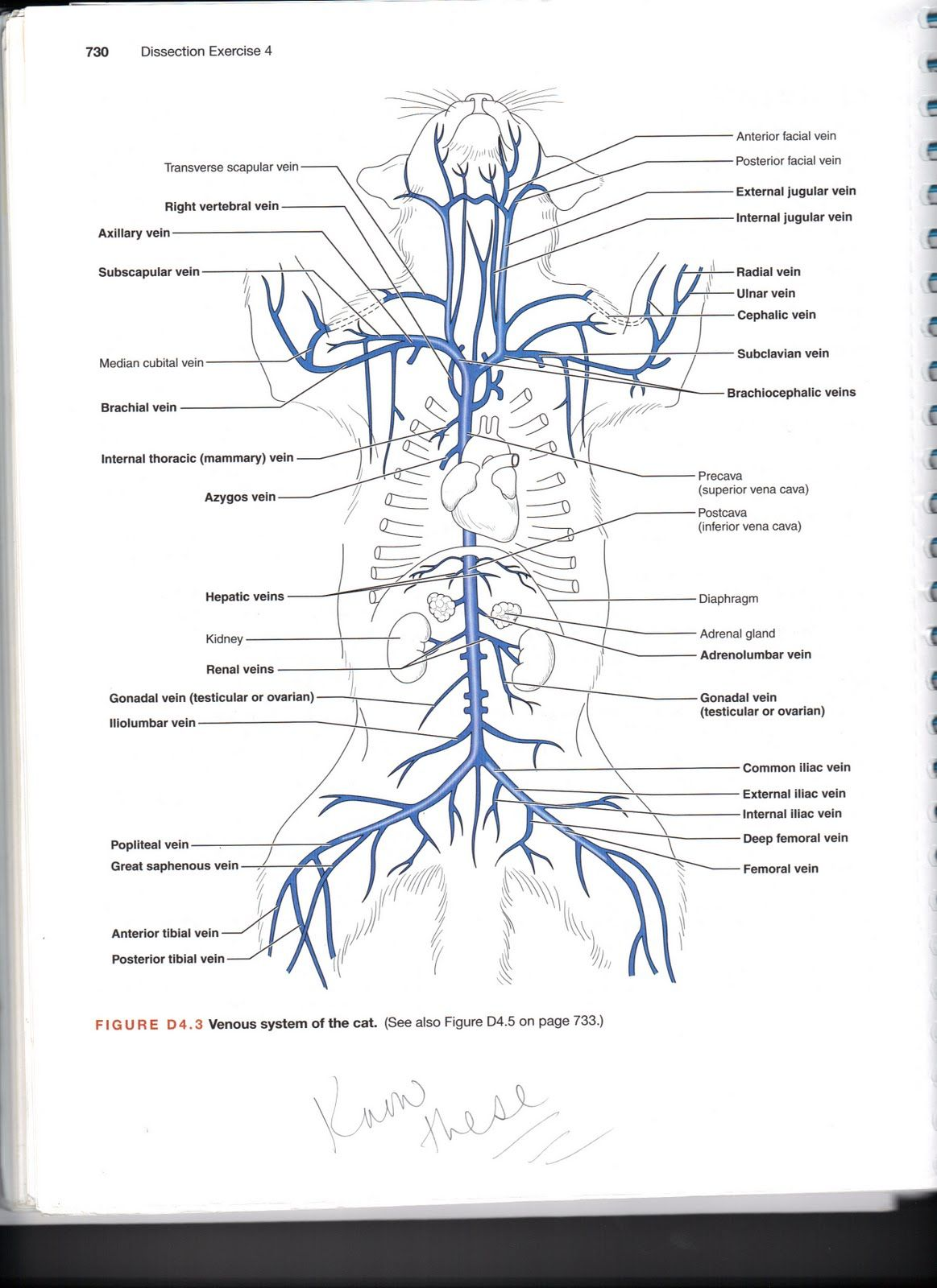 Objectives 34 37 Amp 41 Lymph Organs Immune System And B