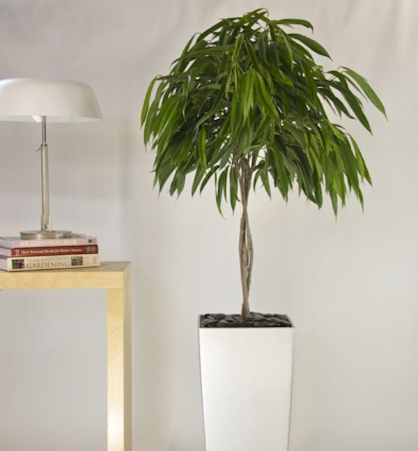 Great Plants for Purifying the Air in Feng Shui is part of Living Room Plants Vines - Certain plants, from Boston fern to the peace lily, have been shown to purify indoor air and are often used in feng shui practice