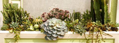 Dish Gardens Bloom Iq Desert Landscaping Rock Garden