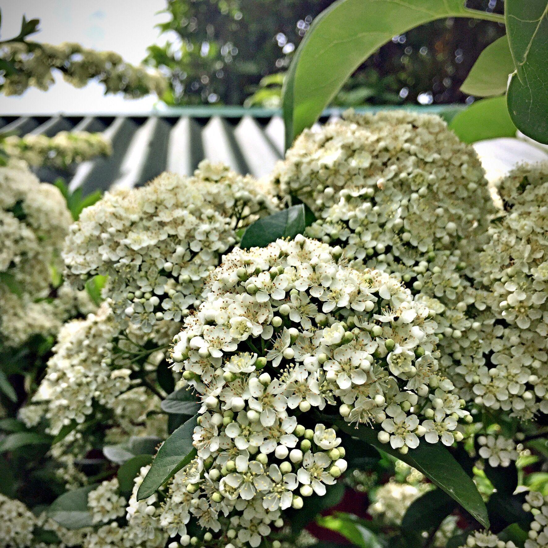 Pin By Mirjana Apro On My Garden, My Houseplants & Garden