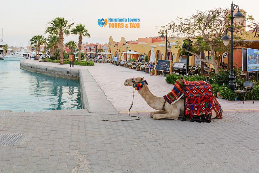 Najlepsze Restauracje w Hurghadzie, Moje ulubione wyprawy