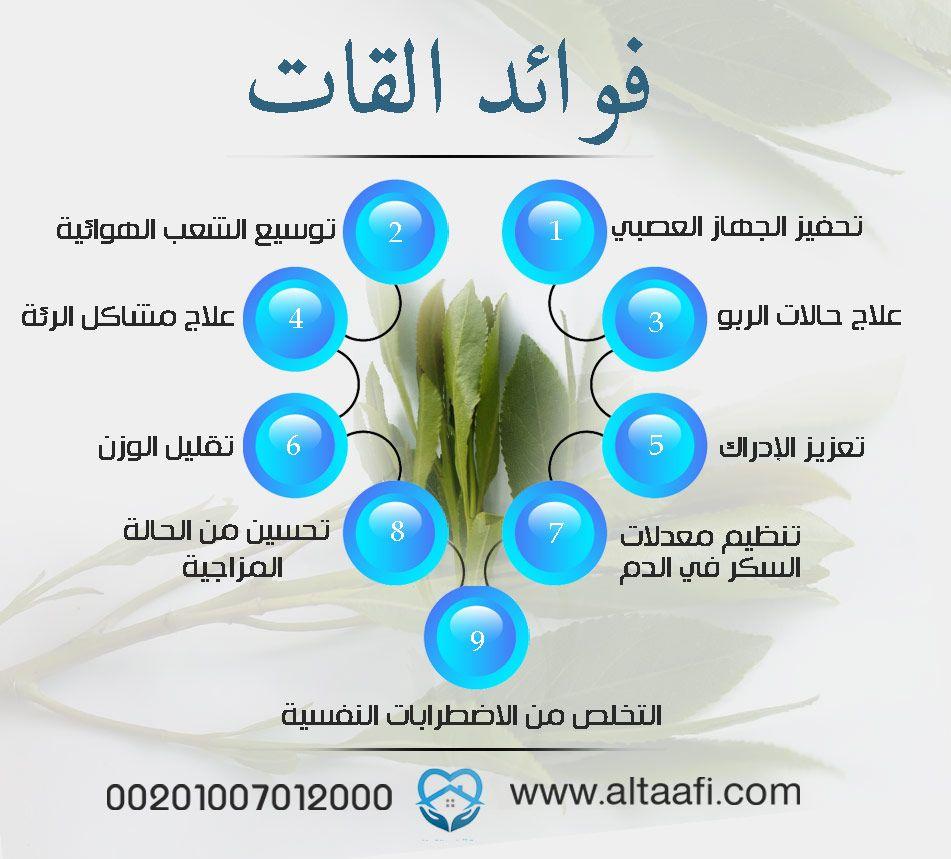 ماهي فوائد القات وأضراره وهل يسبب الإدمان Alc Plants
