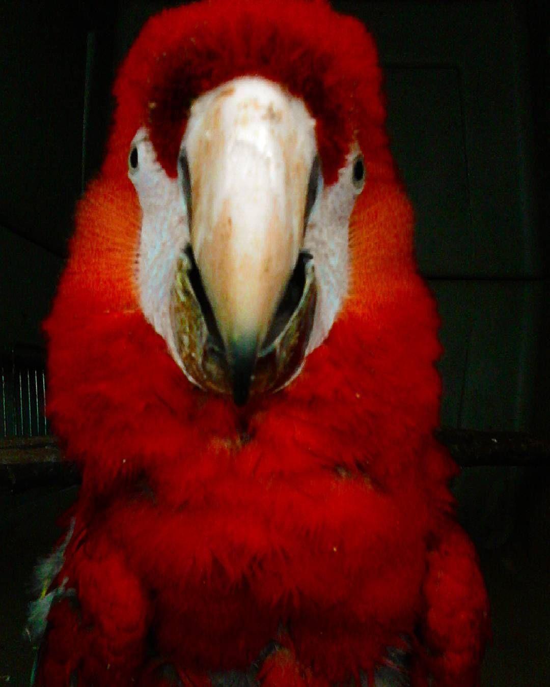 Animal Jobs Near Me 2020 Animals, Macaw, Vet med