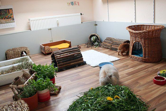 kaninchen und b cherzimmer meerschweinchen pinterest kaninchen hase und meerschweinchen. Black Bedroom Furniture Sets. Home Design Ideas