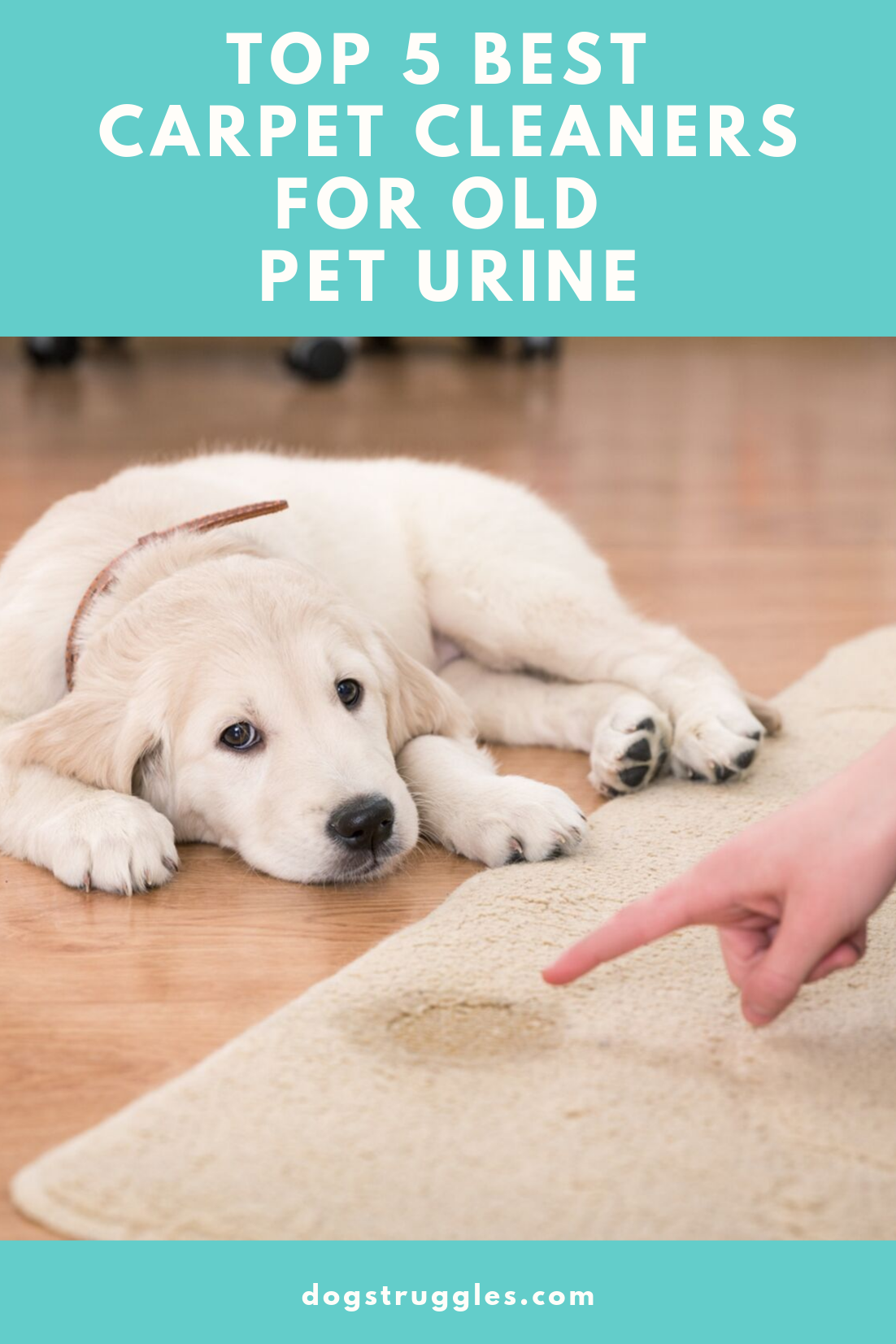Top 5 Best Carpet Cleaners For Old Pet Urine Pet Urine Carpet Cleaners Best Carpet