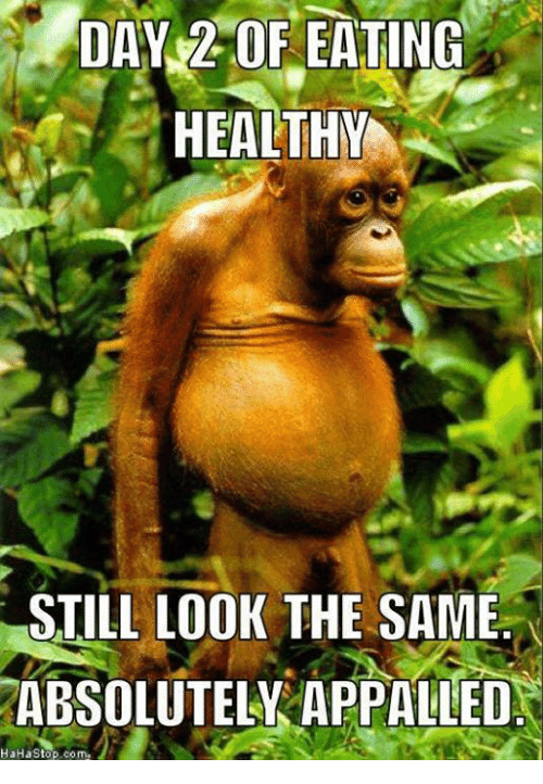 Top 29 Eating Meme | Funny Pictures | Monkey, Monkey ...