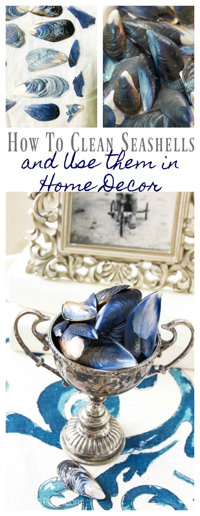 How to Clean Seashells After Your Beach Trip -   12 mussel shell crafts ideas