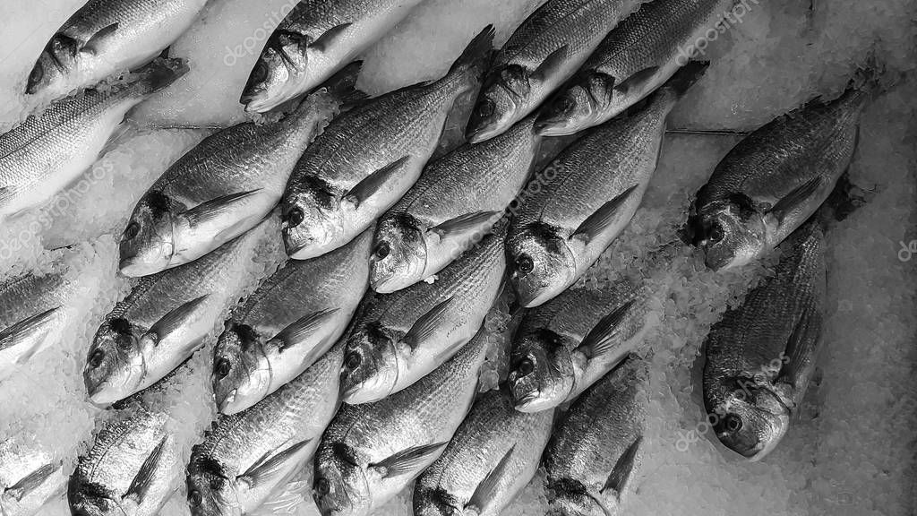 Background Raw Fresh Fish Bed Cold Ice Seafood Market Stall Stock Photo Spon Fish Bed Cold Background Ad In 2020 Seafood Market Fresh Fish Fish