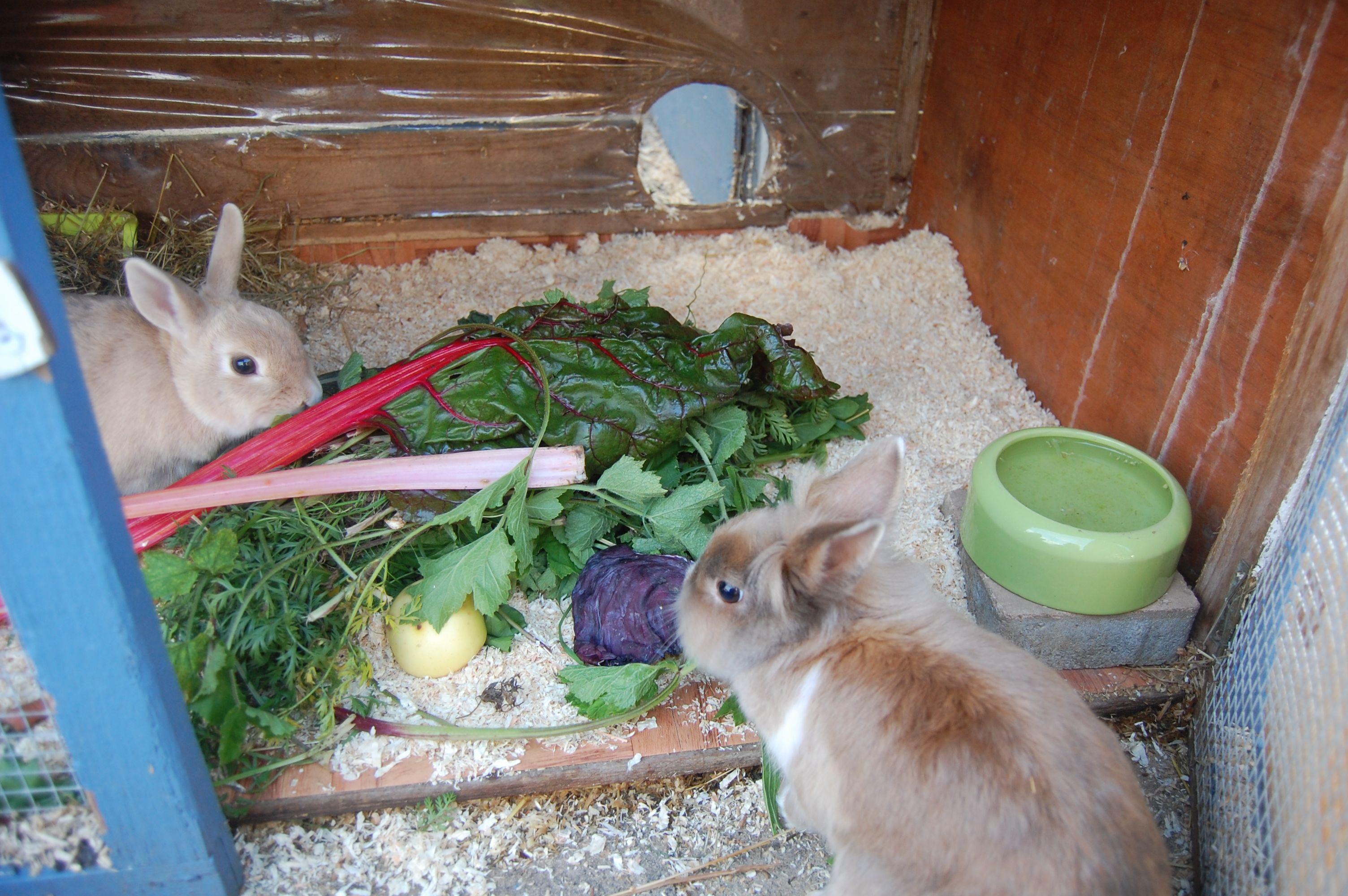 Fütterungstipps (mit Bildern) Kaninchenfutter, Hasen