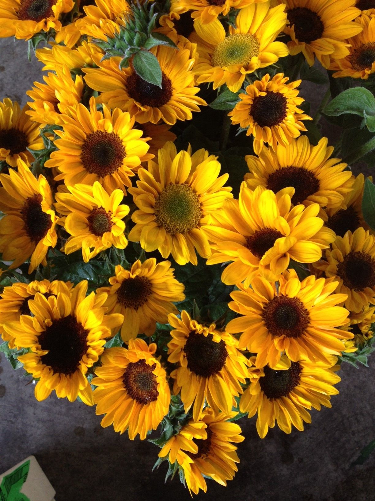 Small Sunflowers Called Sonjald In Bunches Of 10 Stems From The
