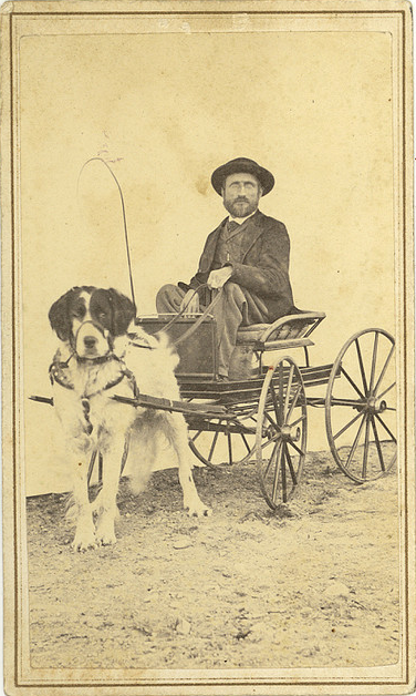 Picture Of A Dog 1900