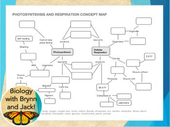 Photosynthesis And Respiration Concept Map Biology Pinterest