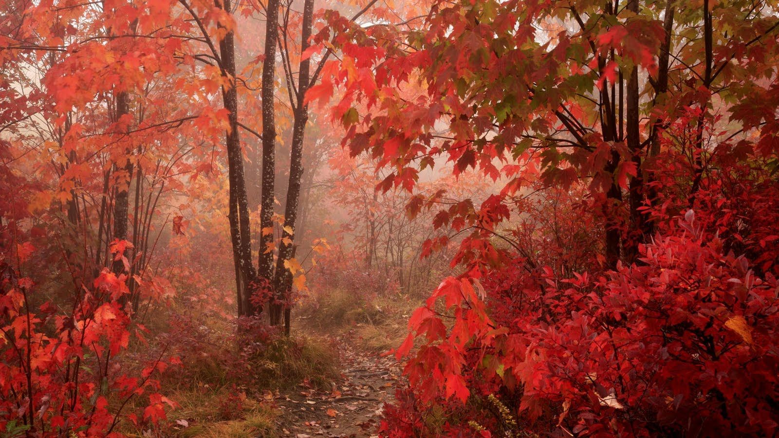 Pics photos hd wallpapers epic desktop s - Fall Backgrounds Fall Red Leaves Forest Autumn Hd Wallpapers Epic Desktop Backgrounds