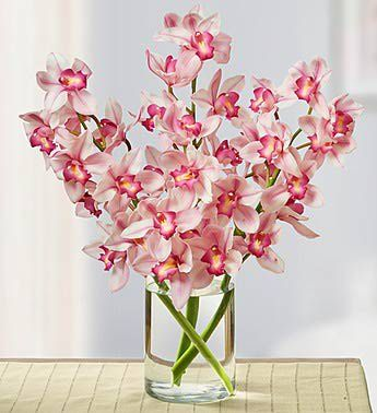 Can You Grow Your Easter Lily Outdoors Cymbidium Orchids Flowers For Everyone Tall Flower Arrangements