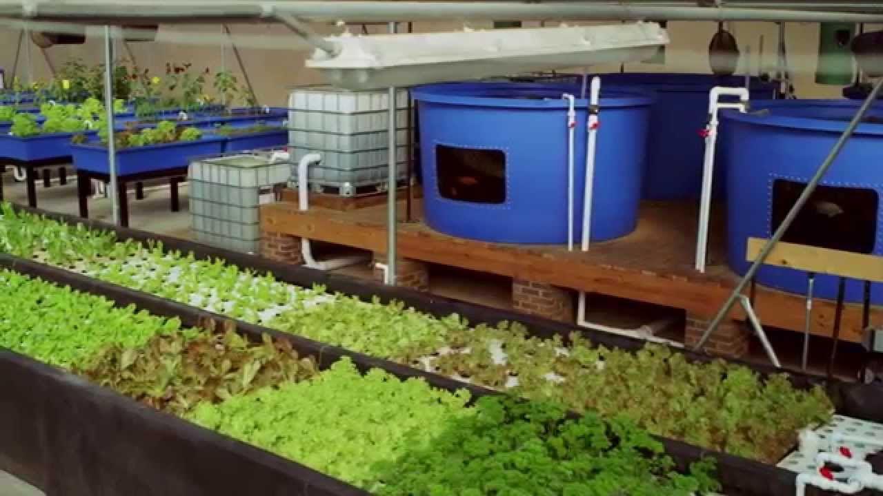 aquaponics farm north carolina lucky clays fresh organic