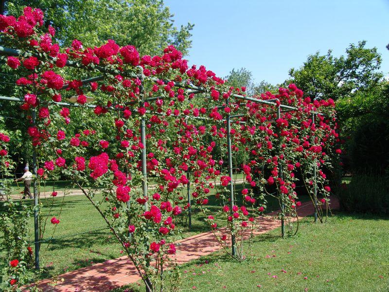 27 Garden Trellis And Lattice Ideas Wood Metal 400 x 300