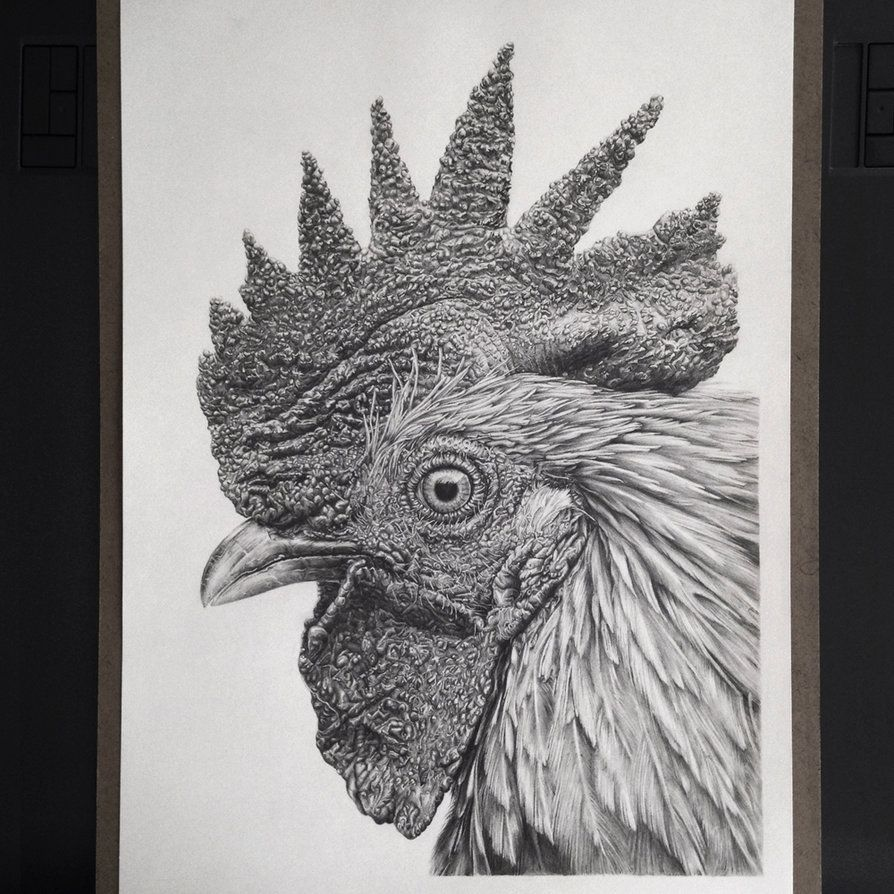 Hyperrealism Rooster By Monica Leezephyrxavier On DeviantART - Amazingly realistic pencil drawings monica lee