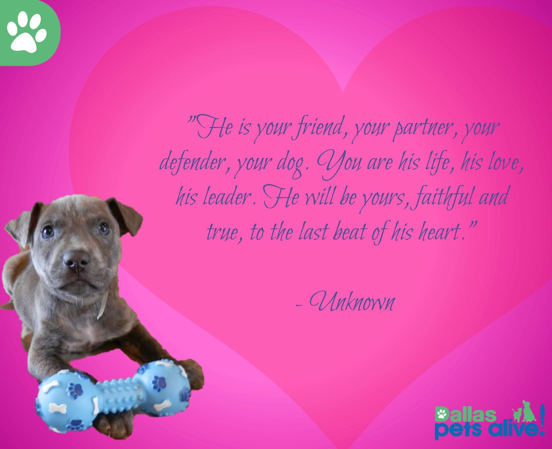Fall in love with your new best friend today! Pets, Some