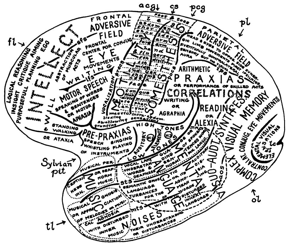 This fascinating (and visually appealing) brain map was ...