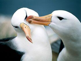 Hayvanlarda Şefkat Video