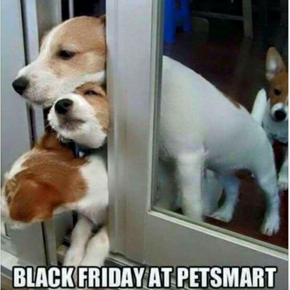 Black Friday At Petsmart Cute Puppy Meme Funny Dogs Puppy Meme