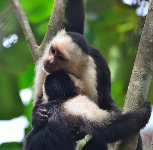 Lapa Rios Eco Lodge Costa Rica Luxury Nature Hotel Eco Lodge Costa Rica Costa Rica Wildlife Costa Rica Luxury