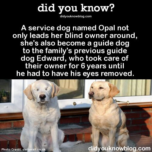 Opal And Edward Cute Funny Animals Beautiful Dogs Dogs