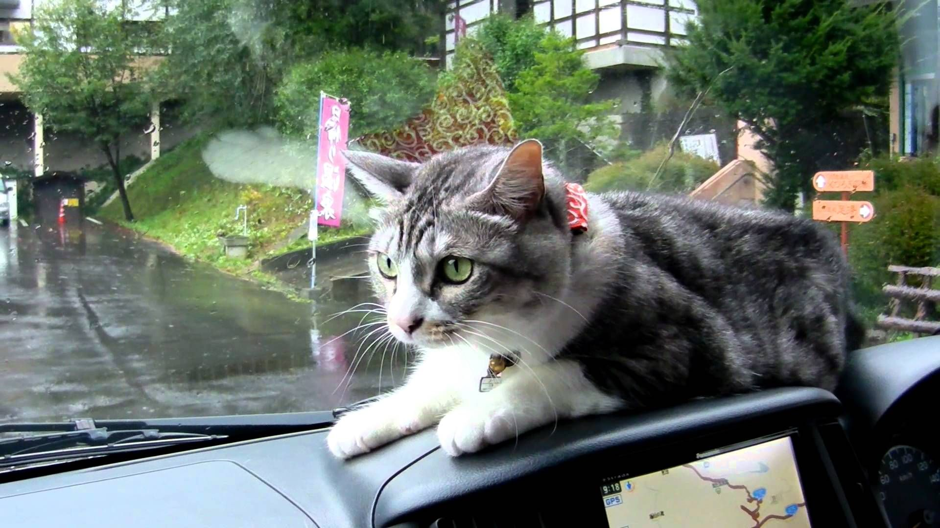 Mei The Cat Fights Windshield Wipers From The Dashboard Of A Car Cute Cat Gif Crazy Cats Cats