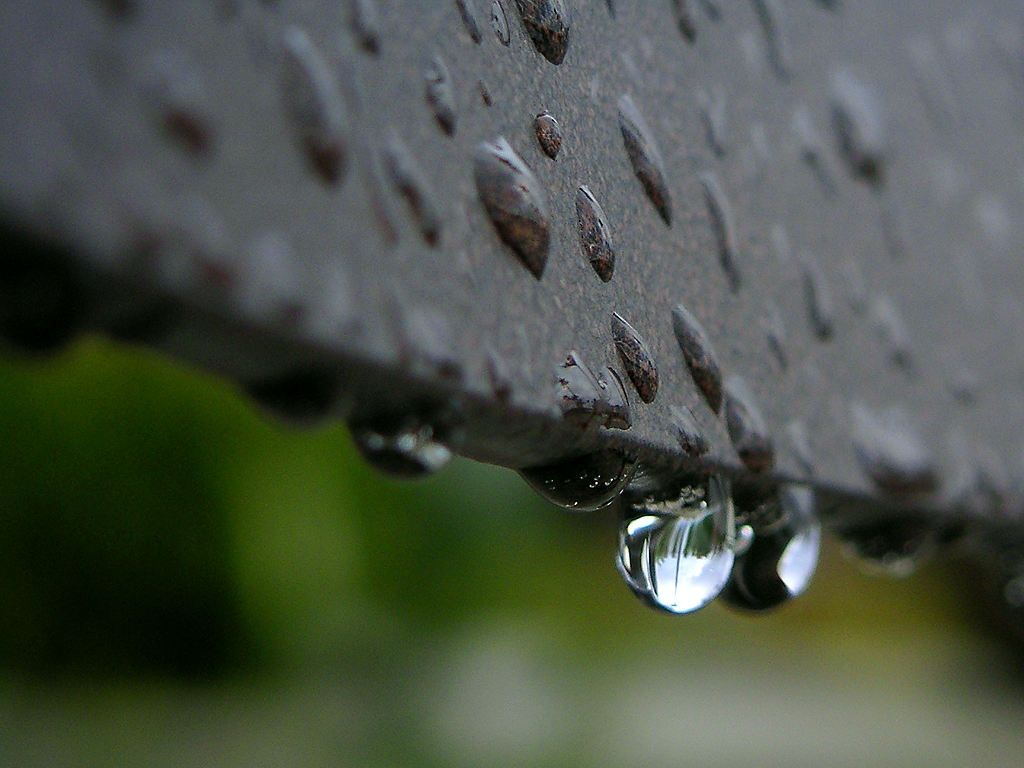 Free Stock Photo In High Resolution Rain Drops Miscellaneous Sound Of Rain Rain Rain Drops