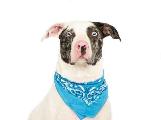 Orlando Fl Orange County Animal Shelter Now Available For Adoption Animals Animal Shelter Adoption