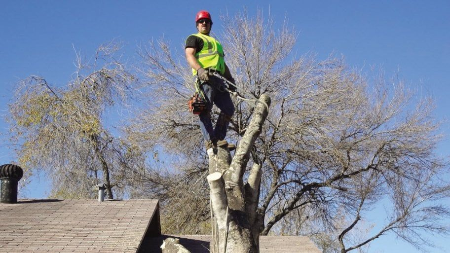 Certified Tree Removal Services provide expert tree