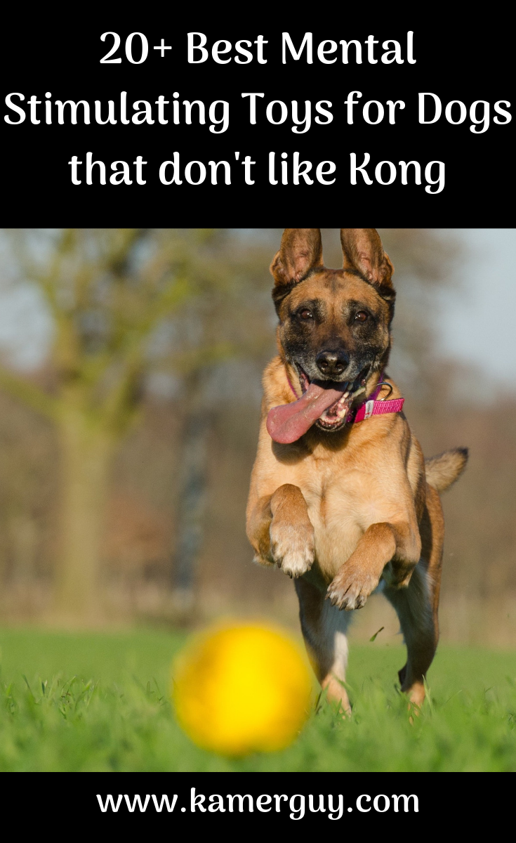 20+ Best Mental Stimulating Toys for Dogs that don't like