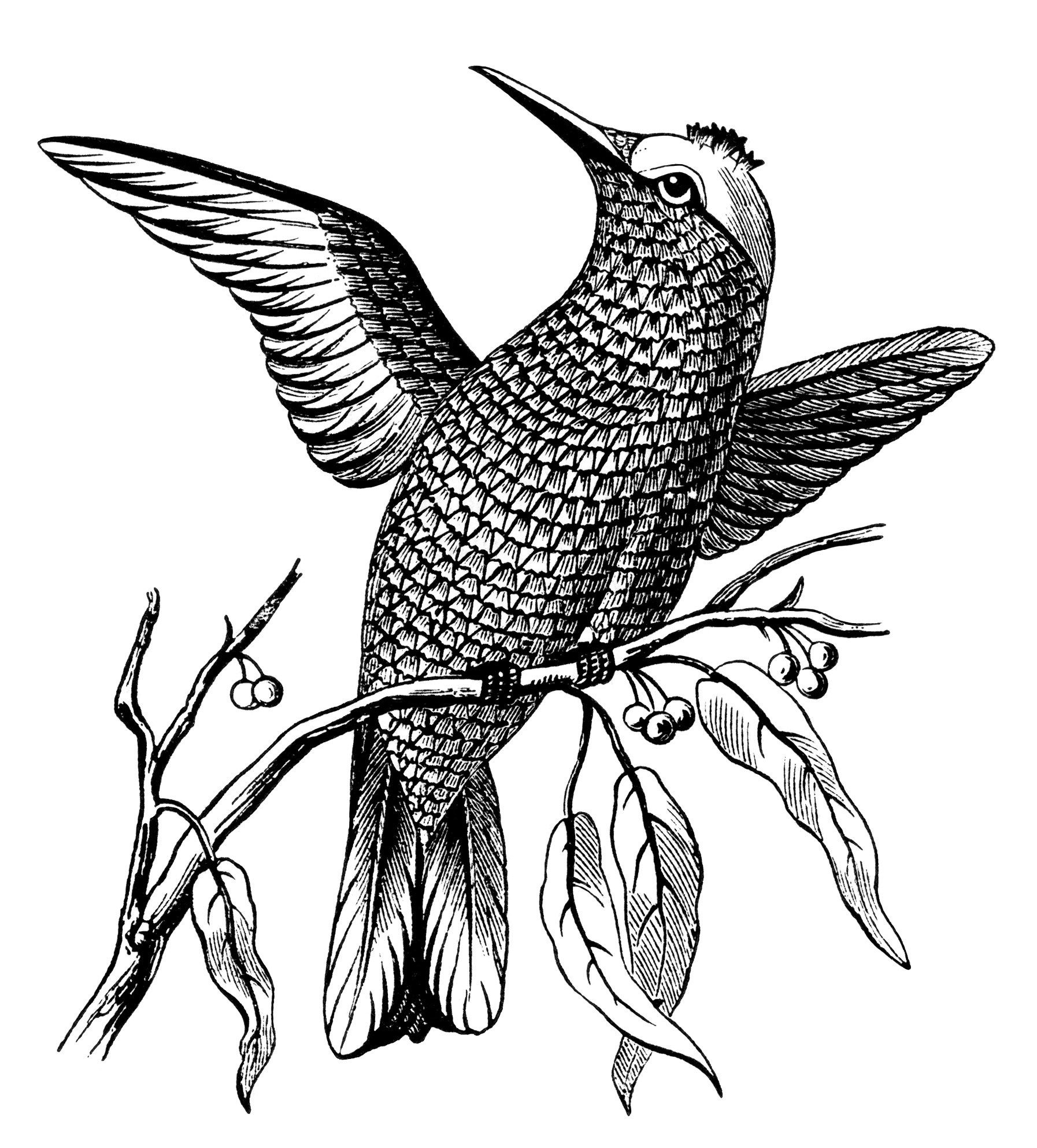 fish scale embroidery design, bird on branch, vintage bird ...