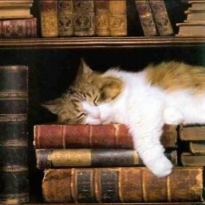 Two of my favorite things, cats & books.