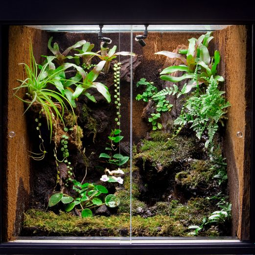 Rain Forest Terrarium Photo Dirk Ercken Depositphotos