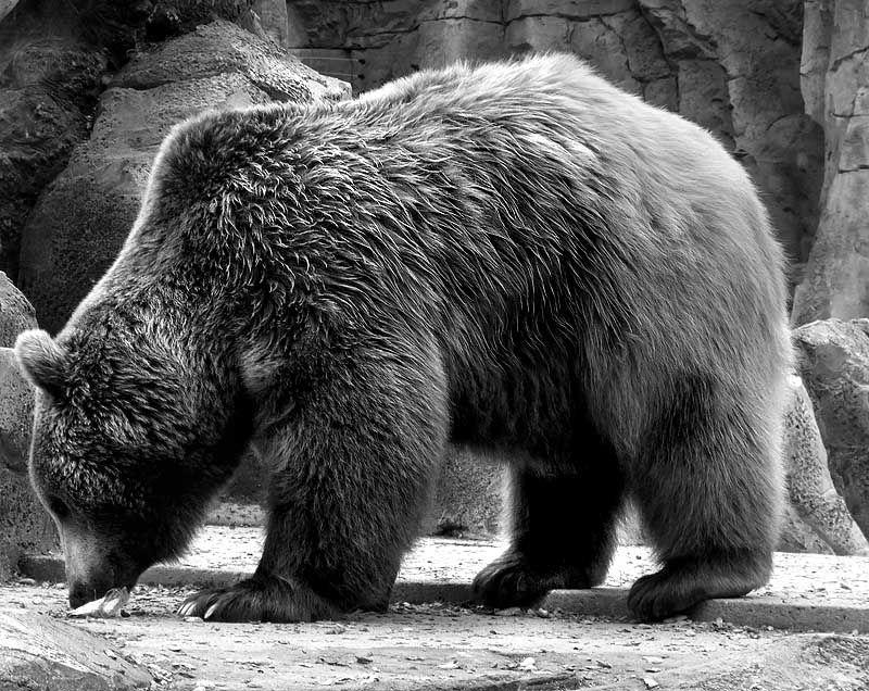 pelo oso texura - Buscar con Google