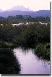 Bird Wathcnig Sardinia