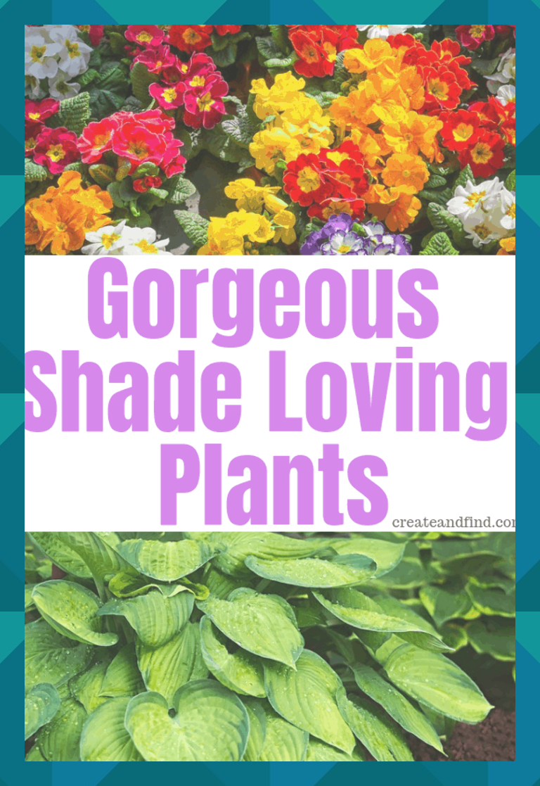 Beautiful Annual And Perennial Plants That Love Shade Add These